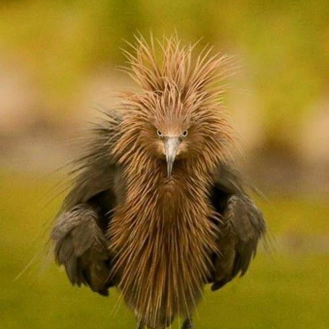 Hneváš sa?