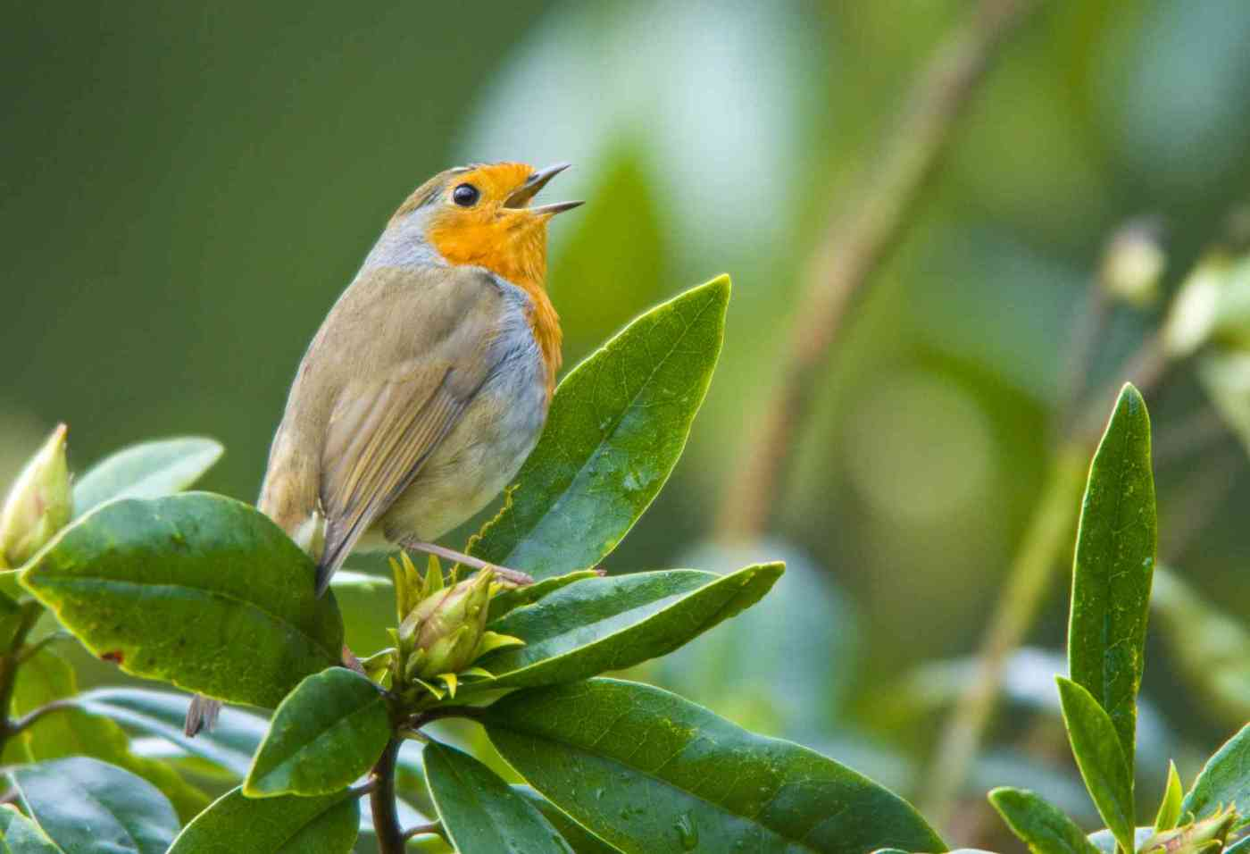 cute-birds-singing